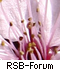 Forum Romance-Scambaiter
